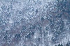Albero con neve Fotografia Stock