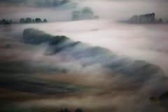 Alberi coperti dalla foschia di mattina Immagine Stock Libera da Diritti