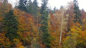 Alberi, coperti di giallo e di color scarlatto delle foglie, su cui cade la luce calda del tramonto, su nelle montagne stock footage