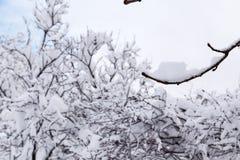 Alberi coperti di neve immagini stock libere da diritti