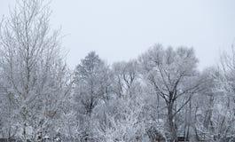 Alberi coperti di neve e di brina un giorno gelido Fotografia Stock