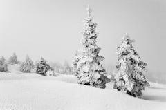 Alberi coperti di neve in Kalavrita Immagini Stock Libere da Diritti