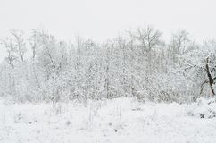 Alberi coperti di neve nella sera di inverno immagini stock