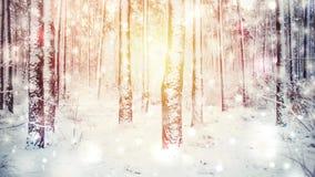 Alberi coperti di neve un giorno di inverno soleggiato luminoso illustrazione vettoriale