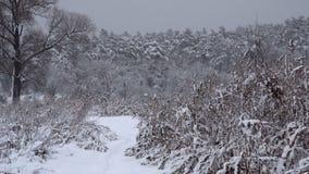 Alberi coperti di precipitazioni nevose pesanti archivi video