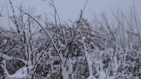 Alberi coperti di precipitazioni nevose pesanti stock footage