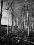 Alberi in corridoi Fotografia Stock