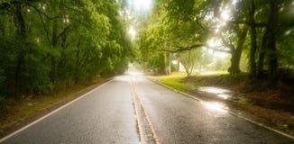 Alberi d'attaccatura di Georgia Farm Road Through Low nella pioggia immagine stock