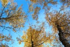 alberi d'autunno Immagine Stock