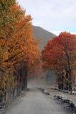 Alberi d'autunno rossi dei fogli immagine stock libera da diritti