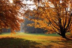 Alberi d'autunno in sosta Fotografia Stock