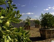 Alberi da frutto Fotografie Stock Libere da Diritti
