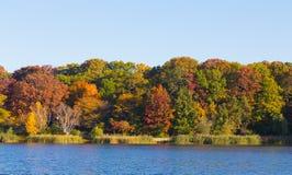 Alberi da un lago Fotografia Stock Libera da Diritti
