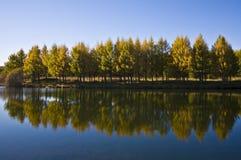 Alberi da un lago Fotografia Stock