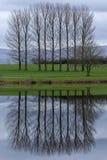 Alberi da un lago in Cumbria, Inghilterra fotografie stock libere da diritti