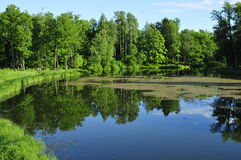 Alberi dal fiume Fotografie Stock Libere da Diritti