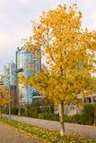 alberi dei fogli di autunno Immagini Stock Libere da Diritti