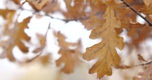 alberi dei fogli di autunno Movimento lento archivi video
