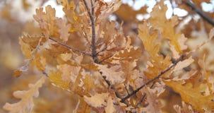 alberi dei fogli di autunno Movimento lento video d archivio