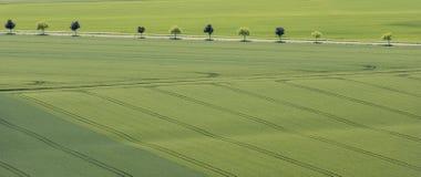 Alberi del campo di grano del modello Immagini Stock Libere da Diritti