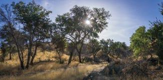 Alberi del canyon della regione selvaggia di California del sud Fotografia Stock