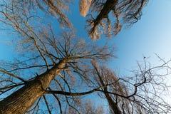 Alberi del cielo Immagini Stock Libere da Diritti