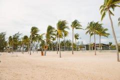 Alberi del cocco sulla spiaggia tropicale sabbiosa bianca Vacanza estiva fotografia stock