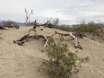 Alberi del deserto immagini stock