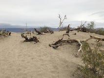 Alberi del deserto fotografia stock libera da diritti