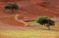 Alberi del deserto Fotografie Stock Libere da Diritti