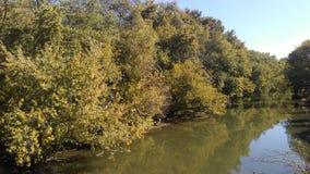 Alberi del fiume Fotografia Stock