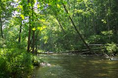 Alberi del fiume della polvere nera Fotografia Stock Libera da Diritti