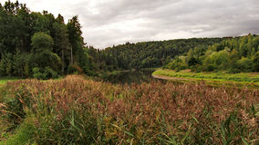 Alberi del fiume e di autunno della foresta Immagine Stock