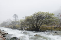 Alberi del fiume in foschia Immagini Stock