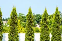Alberi del giardino Immagine Stock Libera da Diritti