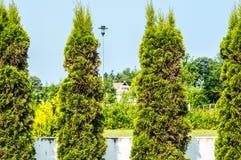 Alberi del giardino Immagine Stock