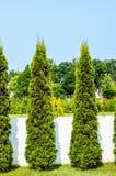 Alberi del giardino Fotografia Stock
