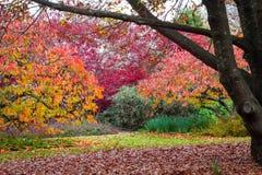 Alberi del giardino in foglie di caduta di autunno Immagini Stock Libere da Diritti