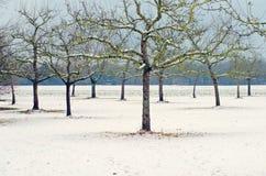 Alberi del giardino nell'inverno Fotografia Stock Libera da Diritti