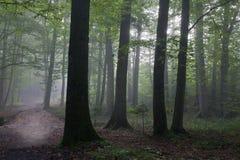 Alberi del hornbeam e della quercia contro indicatore luminoso della mattina fotografie stock libere da diritti