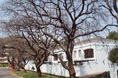 Alberi del Jacaranda lungo il lato della strada a Johannesburg immagini stock libere da diritti