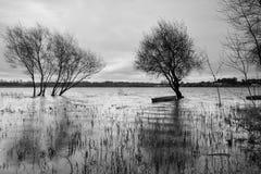 Alberi del lago immagine stock
