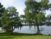 Alberi del lago backyard con muschio Immagine Stock Libera da Diritti