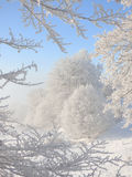 Alberi del lavoro del gelo Fotografie Stock