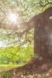 Alberi del paesaggio Fotografia Stock Libera da Diritti