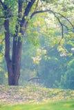 Alberi del paesaggio Immagine Stock