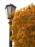 Alberi del paesaggio di autunno con le foglie gialle fotografia stock