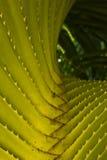 Alberi del Pandanus Fotografia Stock