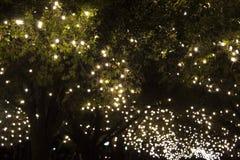 Alberi del parco coperti di luci della corda della lampadina fotografia stock