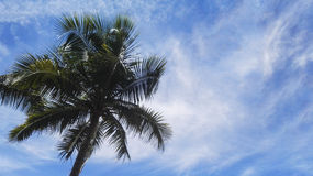 Alberi del plam della noce di cocco con il cielo Fotografia Stock Libera da Diritti